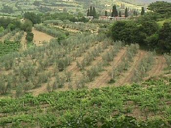 Tuscan Landscape Arezzo.
