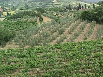 A view of the hills & valleys on the outskirts of Volterra