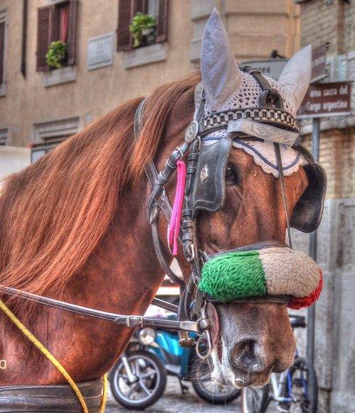 Italian Stallion in Rome Italy